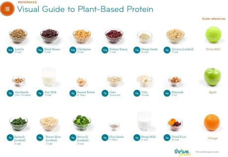 Visual Guide to Plant-Based Protein